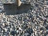 3/8'' Gravel Stone